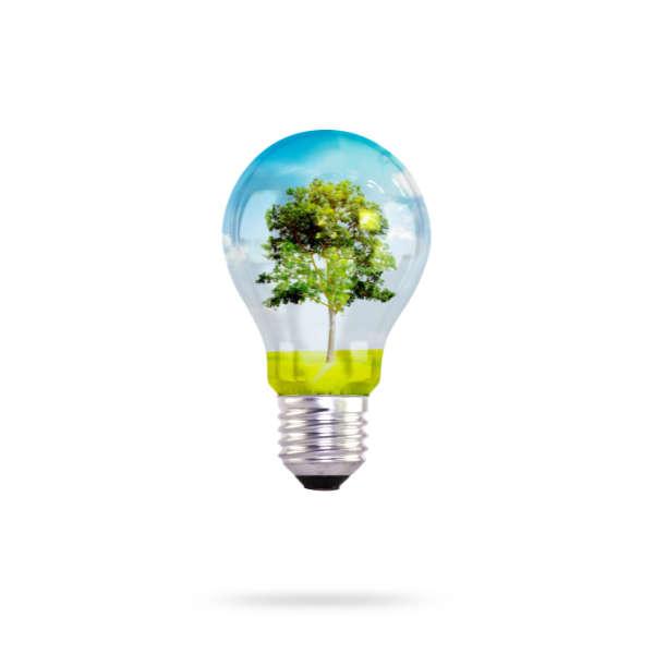 light bulb with tree inside